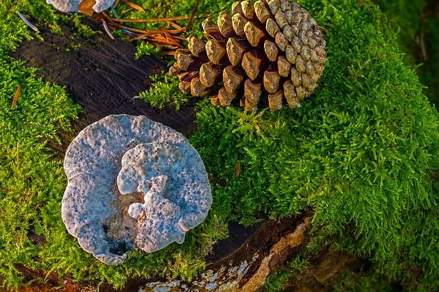 dřevní houby a mech