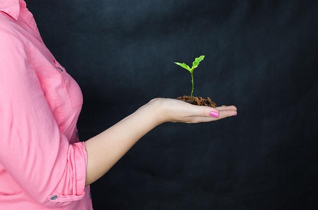 semenáč dubu v ruce